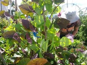 deep in the veggie garden