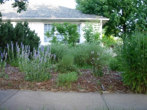 super low maintenance and cost perennial landscape
