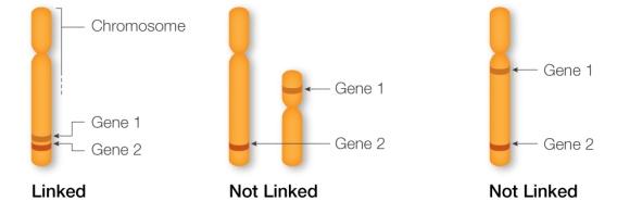 linkage-1